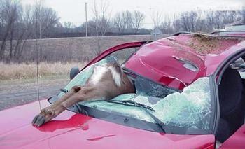 最美性感的车祸女尸现场照片,车祸现场女尸解剖图