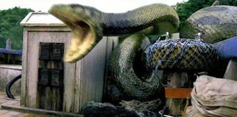 不可思议!辽宁竟挖出140岁蛇精