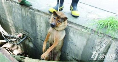 玉林狗肉节的相关宰狗图片,广西玉林捉蛇狗出售,玉林全城遮掩狗字