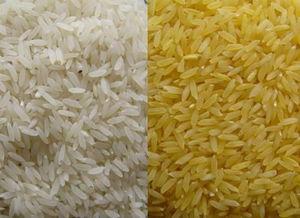 转基因黄金大米事件_黄金大米转基因事件最新处理结果研究员被停