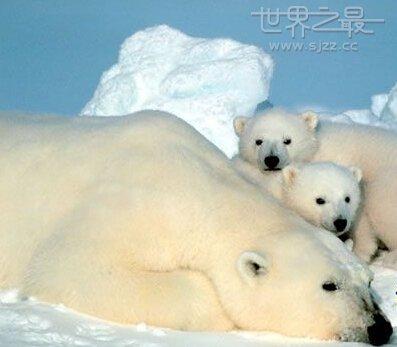 中国前100种珍稀动物,世界十大珍稀动物