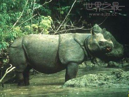 中国有哪些稀有动物和植物-中国稀有动物