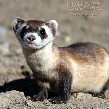 中国前100种珍稀动物,世界十大