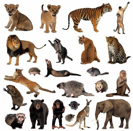 野生动物保护法实施条例全文细则