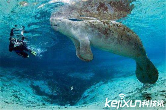 世界上最漂亮的美人鱼图片_世界上有美人鱼活着吗?世界上最漂亮的美人鱼,美人鱼真实图片活 ...