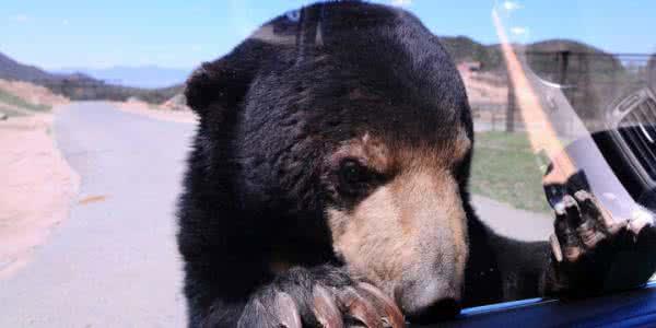 八达岭动物园游客投食被黑熊咬过程现场视频,被咬男子