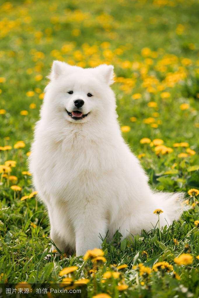 """娱乐资讯     单听""""微笑狗""""这个可爱的名词,你是不是会马上联想到"""""""