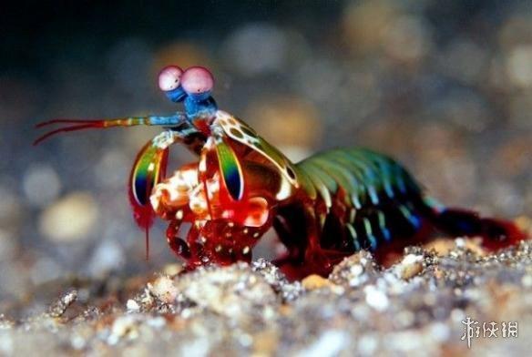 奇异宠物图片大全哪种好养在哪买?蟑螂蜈蚣蝎子蜘蛛当