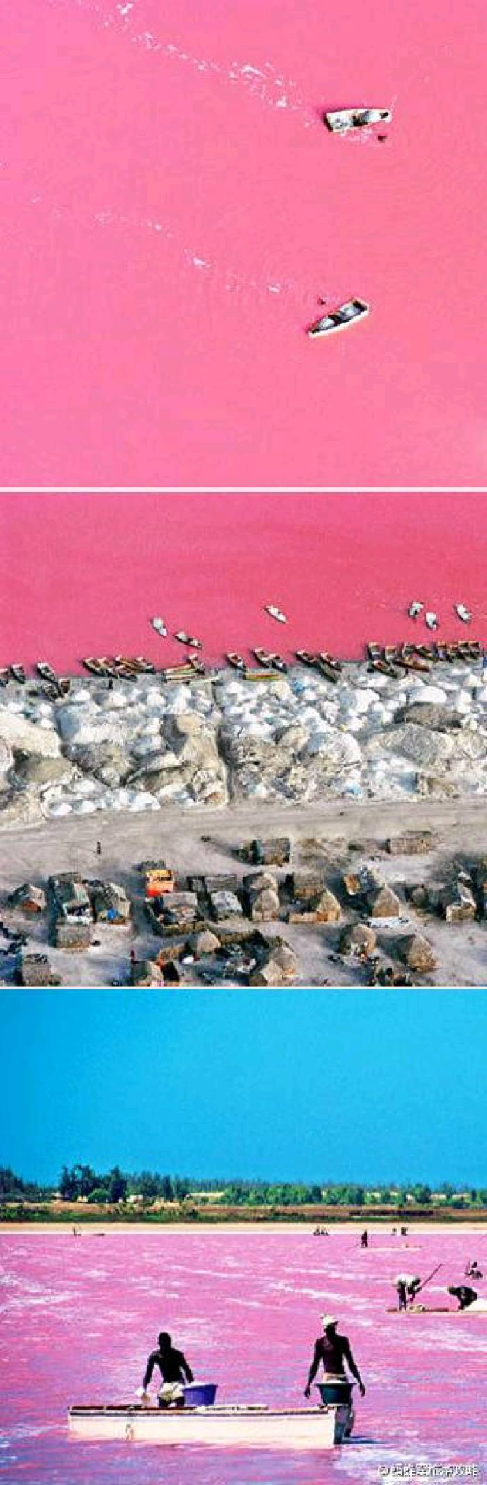 塞内加尔玫瑰湖_塞内加尔粉色玫瑰湖为什么颜色会变 游泳可以浮起来吗里面有鱼 ...