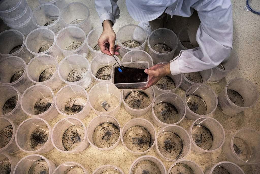 世界最大蚊子工厂居然在中国,生产出来的蚊子可以克蚊子咋回事