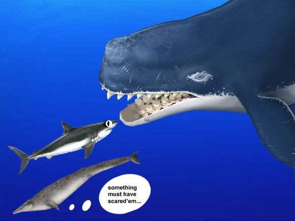史前第一可怕巨兽梅尔维尔鲸捕杀巨齿鲨图片 梅尔维尔鲸天敌是啥