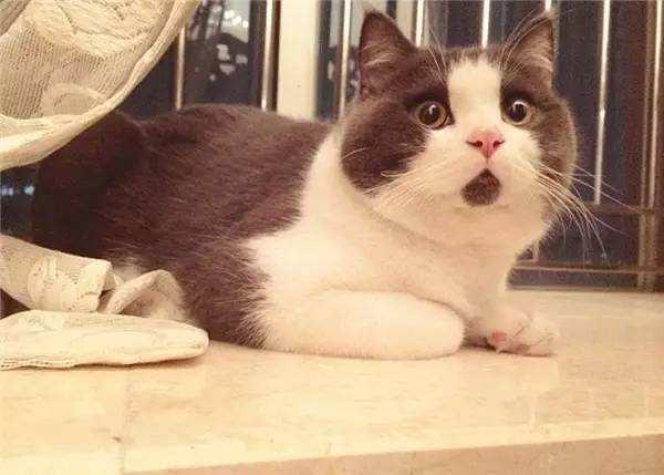 猫怕黄瓜香蕉什么原因 猫被黄瓜吓飞gif动图 请不要用