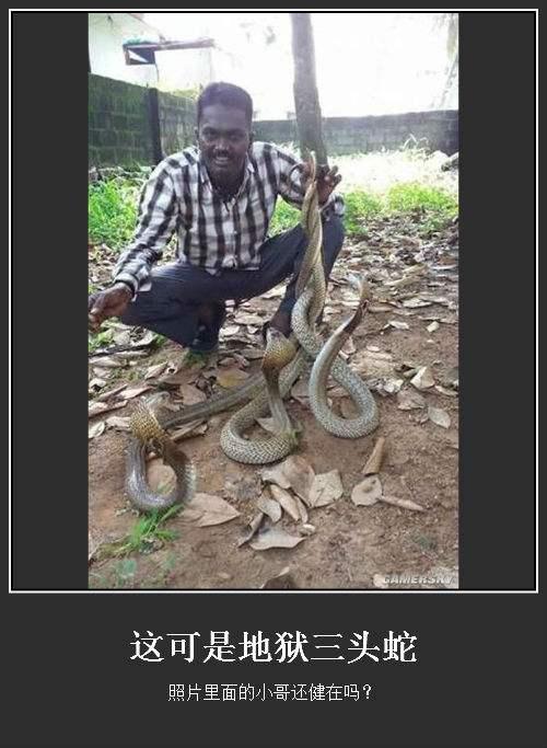 五台山三头蛇图片是真的吗太诡异了 看见三头蛇要小心