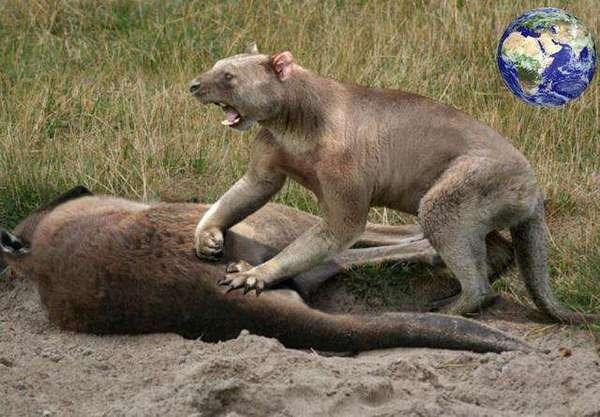 外形大小看起来差不多像一般的雌狮子或者个头小点儿的老虎.