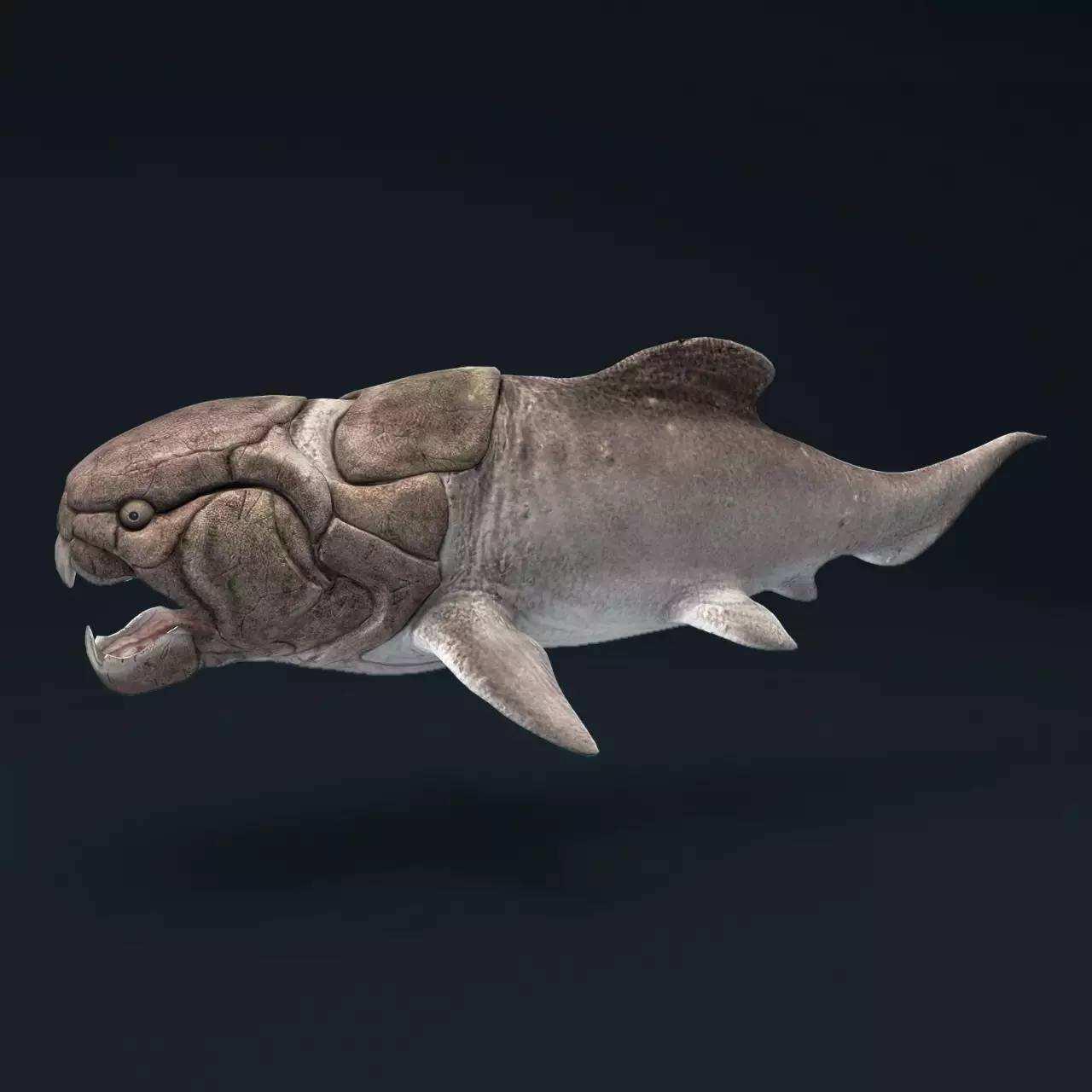 """如果问你""""世界上咬合力最大的动物"""",你会想到哪一种?而万幸的是小编今天要介绍的这种生物早已灭绝,它们就是生活在古生代泥盆纪时期的古生物---邓氏鱼!说它们是鱼类,还不如称其为""""怪兽"""",因为它们长得也太丑了吧?金刚石是世界上最坚硬的物质众所周知,但按照邓氏鱼的咬合力,分分钟能将金刚石咬成粉末!  邓氏鱼这种古生物,虽然身长只有11米左右,但它们的体重能达到6吨,而咬合力竟然能达到5吨!别说是要分分钟将猎物咬得嘎嘣儿脆了,如果真的要将这个世界上最坚硬的金刚石放进"""
