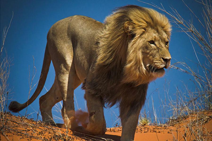 世界已灭绝的动物最全排行榜,有些你会拍手叫好但有些
