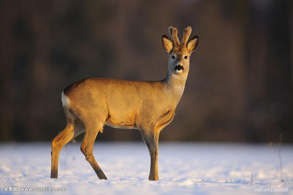 世界上最可爱的动物谁第一?每一个都萌到骨子里不许给