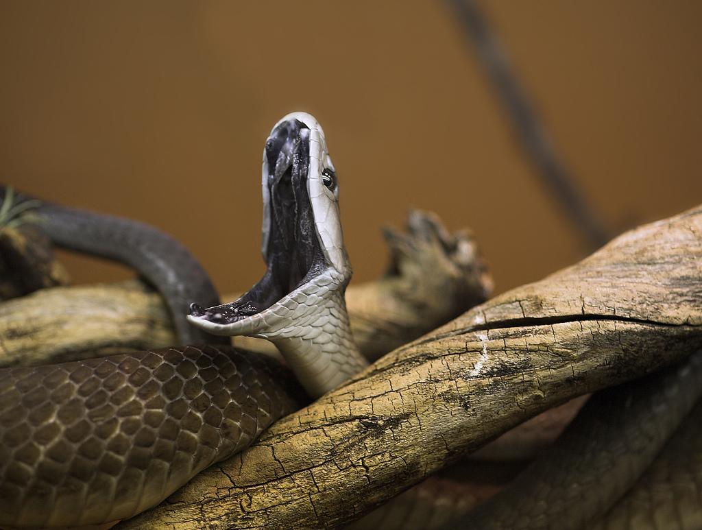 世界上十大最危险的动物,有些明明很好相处的样子怎么