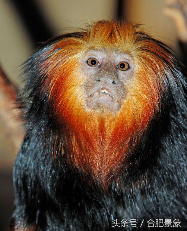 世界十大最珍稀野生动物最新数量,再不重视就只能在教科书上见了