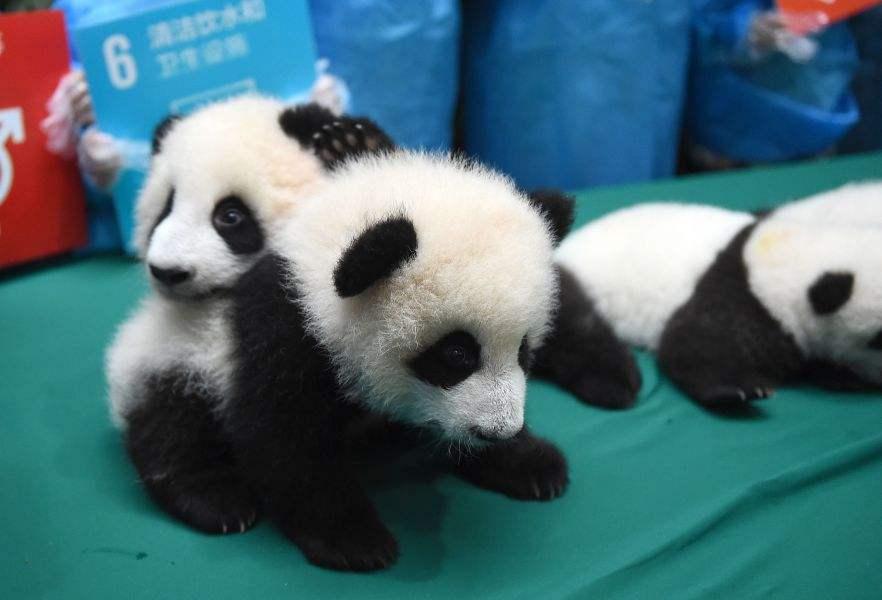 地球上最可爱的动物宝宝,这些长大后五大三粗的动物小时候萌炸天