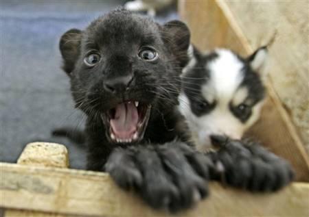 地球上最可爱的动物宝宝,这些长大后五大三粗的动物小