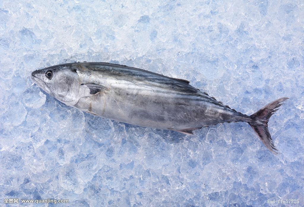 最令人惊叹的十大海鱼鲜得咧!就算再毒光听名字也要拼命吃个够!