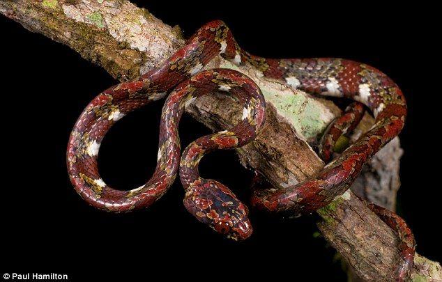 世界上最怪异的蛇高清图大全 打包票你绝对没见过其中
