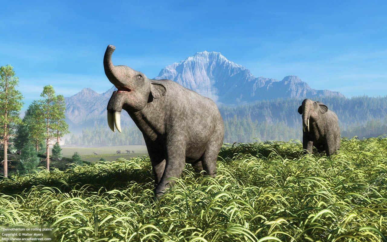 """说起智商极高的大象,相信很多人去泰国游玩时都要与其亲近一番,而在人们看来,如今的大象身材已经十分高达魁梧了,但其实历史上还有一种叫做""""恐象""""的长鼻目象科的,身材甚至比猛犸象还要高大很多,而且它们的牙齿长得也忒怪了吧,跟我们如今所见到的大象似乎差得有点儿远啊,而看似凶猛的它们会吃人吗?最终是怎么灭绝的?随着小编一起来了解。  恐象生活在距今数百万年的中新世中期至史前更新世早期,属于形象长鼻目,是长鼻类进化历程中分化出的一类形态特殊的旁支,早已灭绝。同其他长鼻类动物一样,恐象也有一段进"""