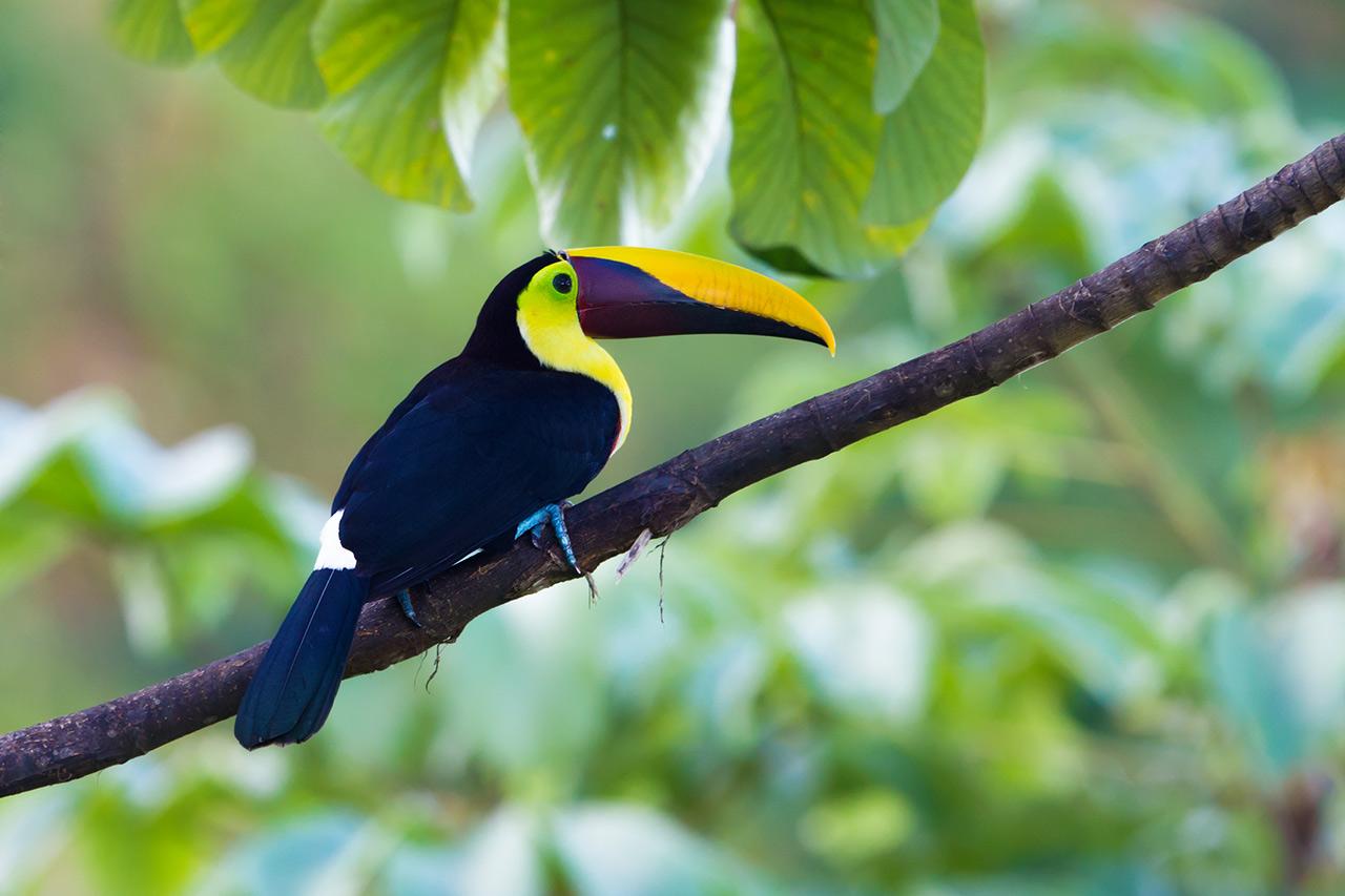世界上颜色最鲜艳的动物高清图片大全 好多新鲜物种你