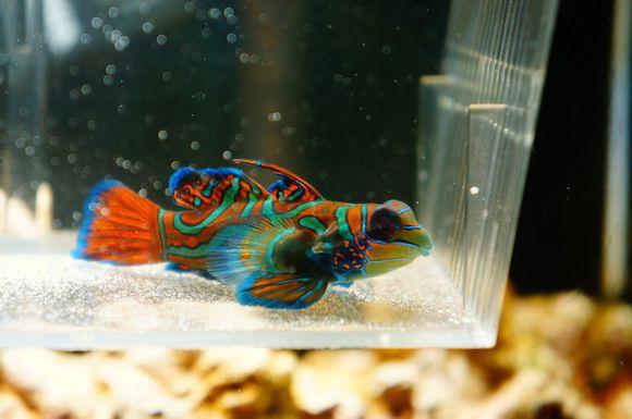 社会资讯_世界上颜色最鲜艳的动物高清图片大全 好多新鲜物种你听都没听 ...
