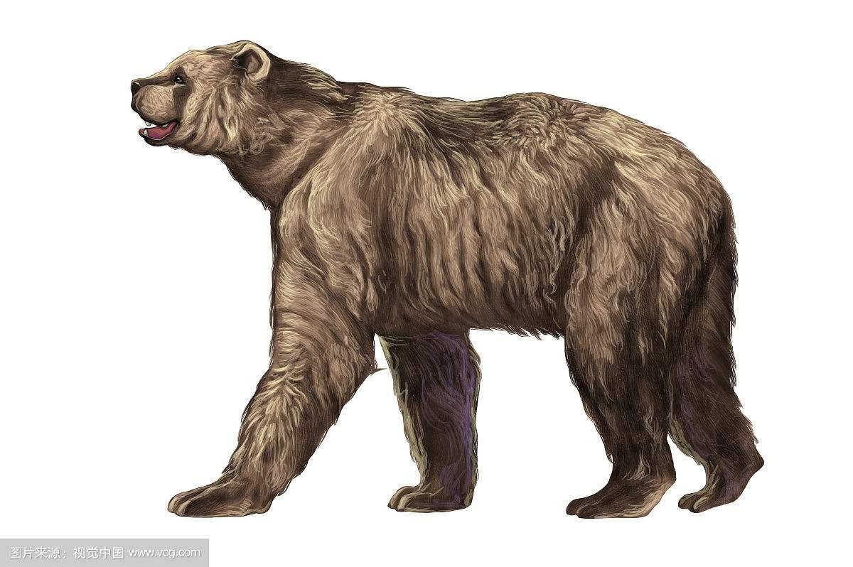 史上体型最大的熊巨型短面熊 一巴掌能拍碎任何动物的