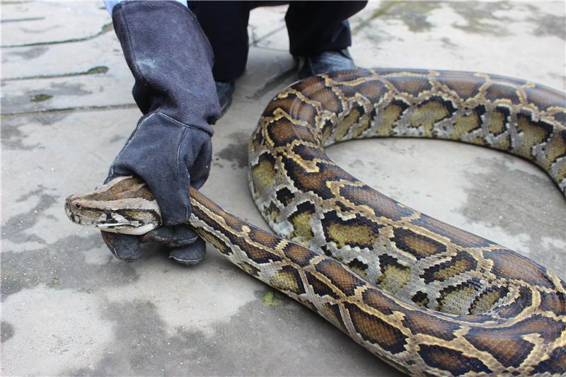 """世界上十大巨蛇实拍图 每条都""""成精""""了又粗又长到让你"""