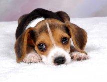 揭秘女人养狗的真正的原因,养狗的女人不能娶是真的吗?