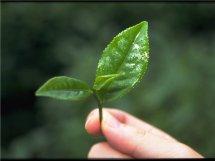 好听高雅大气的茶叶商标名字 有诗意有创意的茶叶商标名该怎么取
