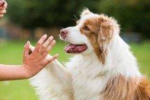 女人梦见狗是什么预兆周公解梦,女人梦到好几只狗好不好什么意思