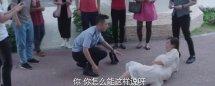 警犬来了孕妇碰瓷梁第几集